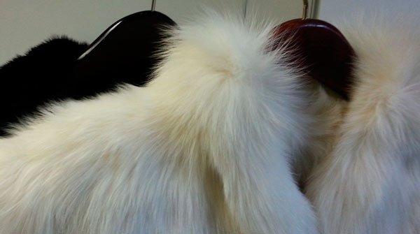 Белый пожелтевший мех
